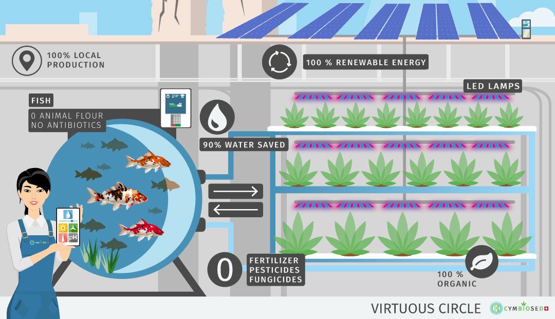 aquaponic-cbd-cannabis