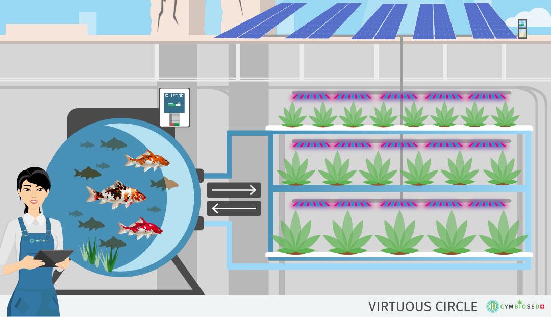 aquaponics-cbd-cannabis